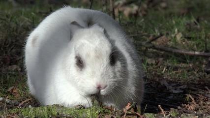 Weißes Kaninchen liegt und schläft auf der Wiese