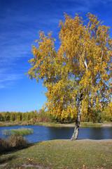 Autumn landscape - pond in the park