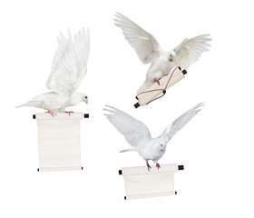 three flying isolated doves with white scroll