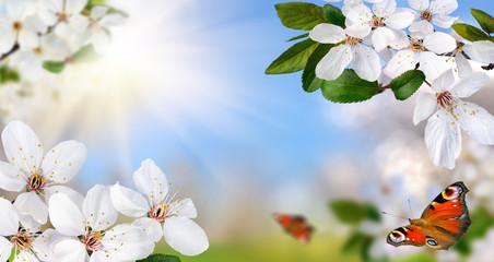 Frühlingsparadies © Smileus