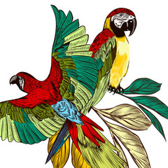 Background with colorful tropical parrots