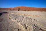 Fototapeta stiff cracked soil Sossusvlei, Namibia