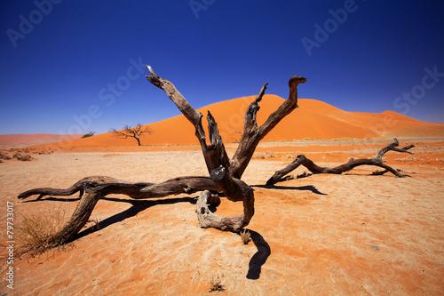 Canvas Woestijn dry tree Sossusvlei, Namibia
