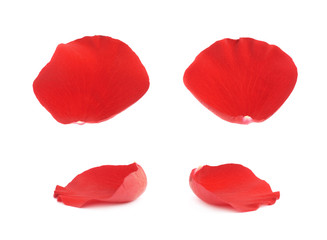 Red rose flower petals set isolated