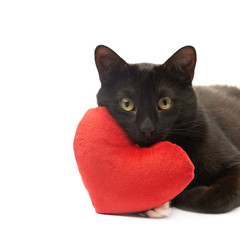 Black cat and red heart
