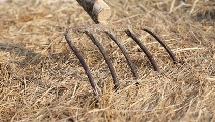 long prongs of Pitchfork on the Hay on the farm