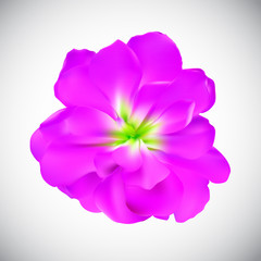 Realistic Flower High Quality Vector Illustration