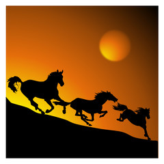 Galloping horses on the sunset background