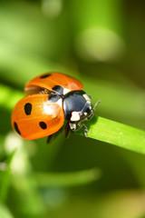 Marienkäfer...Ladybug