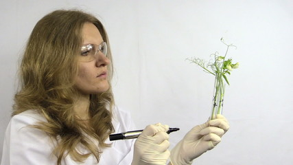 biologist write whit marker codes on flask with pea sprout