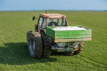 Farmer fertilizing wheat