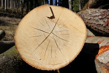 Gefällter Baumstamm in einem Wald