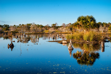 Swamp landscape in St. Andrew's State Park in Panama City Beach,