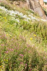 Wildflower Covered Cliff, Mundesley, Norfolk, UK