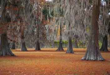 Moss Tree 3