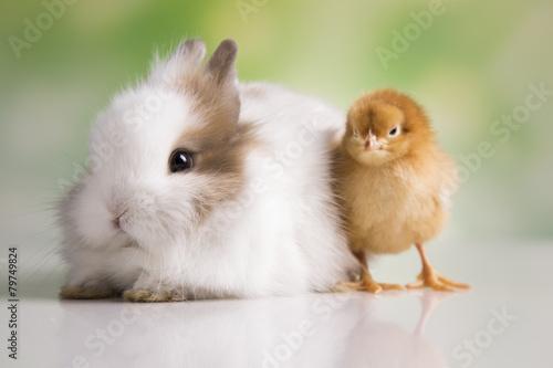 Foto op Canvas Kip Happy Easter. Chickens in bunny