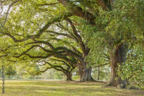 Park Tree 13 - 79750071
