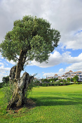 Golf course, Costa del Sol, Andalusia, Spain