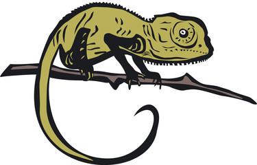 Chameleon vector illustration