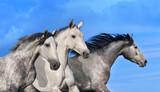 Fototapety Three horse portrait in motion