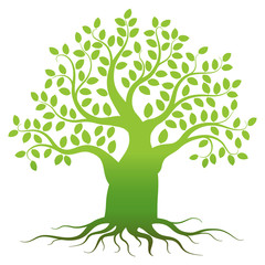 Green tree silhouette on white background, vector illustration