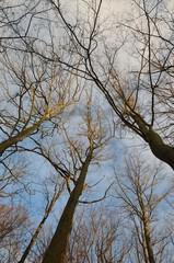 Abendsonne in kahlen Baumkronen