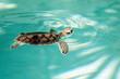 Leinwanddruck Bild - Cute endangered baby turtle