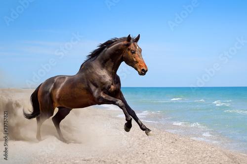 Beautiful horse run  along the shore of the sea Canvas