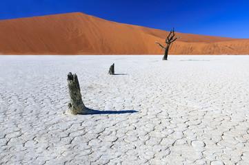 Dead acacia trees in Sossusvlei Pan, Namibia