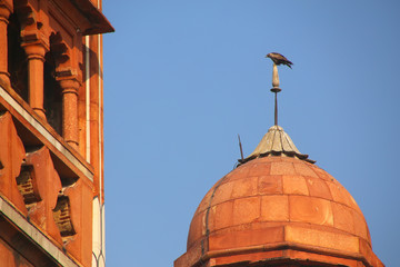 Close view of a small dome with hawk sitting on top, Safdarjung