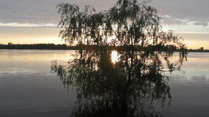 tree, sunrise