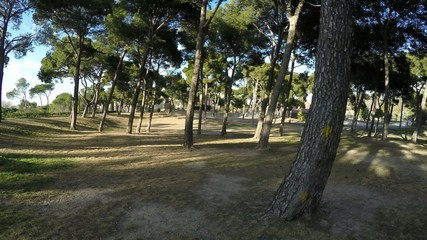 overview of the park with trees, and shadows during a sunset