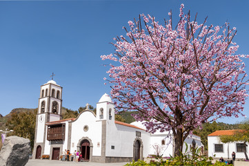 Main square of Santiago del Teide and almond tree