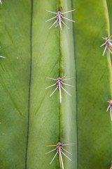 Green Cactus. Succulent. Macro view