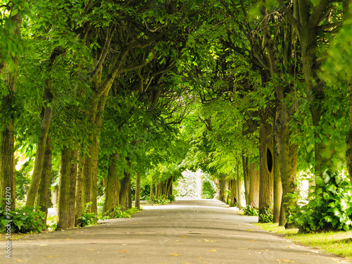 sidewalk walking pavement in park. nature landscape. - 79764270