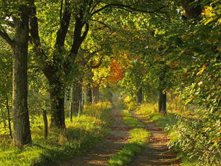 Autumn wild landscape with road
