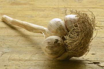 Aglio di Resia garlic Allium sativum Ajo Ail cultivé Knoblauch