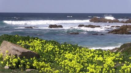 Scenic California Coast