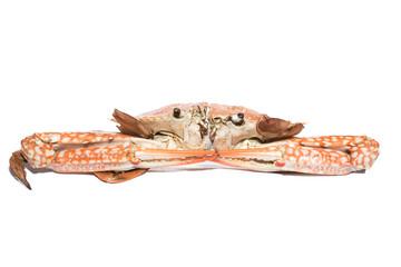 sea crab isolate on white