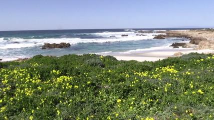 California Coast and Wildflowers