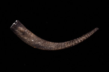 Horn on a Black Background