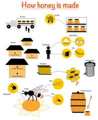 Set of icons how honey is made, all process how produce honey in