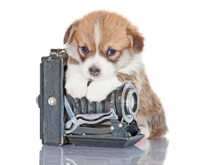 Pembroke welsh corgi puppy with old camera
