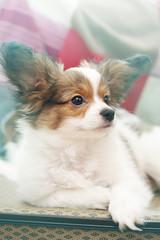 Portrait  puppy