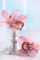 Flowers  Phalaenopsis