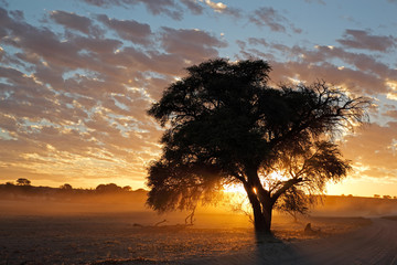 African sunset with silhouetted tree, Kalahari desert