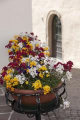 Angolo fiorito, Castelrotto, Trentino