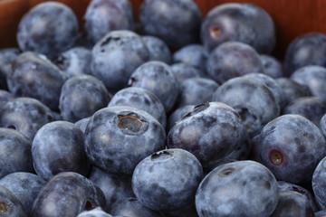 Freshly picked organic blueberries