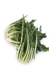 cicoria romana_ verdura su sfondo bianco