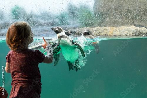 Foto op Aluminium Pinguin Kind vor Pinguinaquarium
